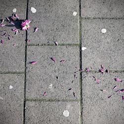 Straat bloem