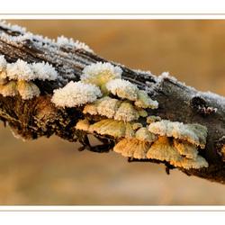 herfst of winter