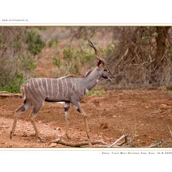Kudu, Kenia