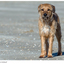 Dog Timo