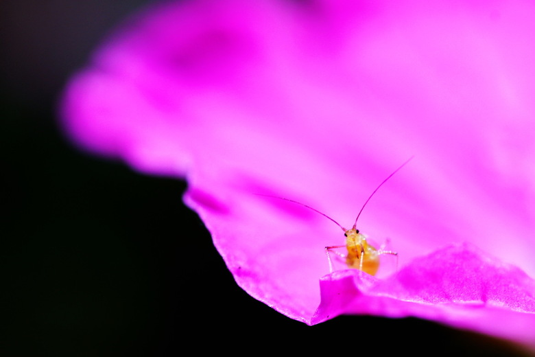 Hallo wereld! - Een macro rondje door de tuin leverde dit beestje op dat vrolijk de wereld in keek. Volgens mij is het een bladluis, dus of ik er echt