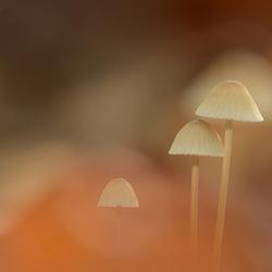Paddenstoel tussen herfstkleuren