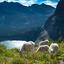Many Glacier (Montana)