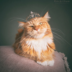 Ivar the king