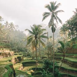 Ubud, Indonesie