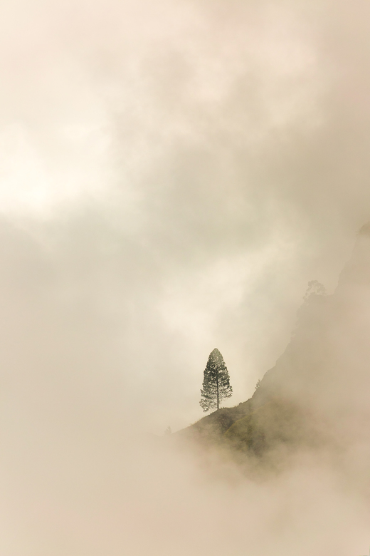 Out of Sight - Shot from our apartment, on a very misty day.<br /> the tree was standing at the edge of a cliff on the famous Ella Rock peak. At the