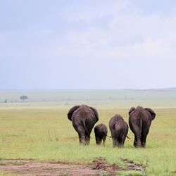 Olifantenfamilie in Tanzania