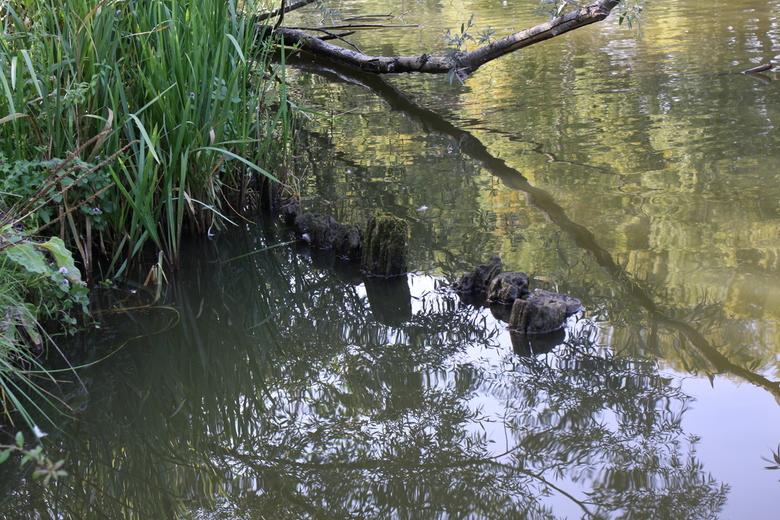 Waterspiegeling - Spiegelingen in het water aan de oever van de Dommel