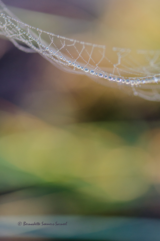 Surprise - Een bedauwd spinnenweb op de heide. Het natte gras en de bloeiende heide zorgt voor een spannende, haast abstracte achtergrond. <br /> Als