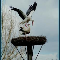 Love is in the air..