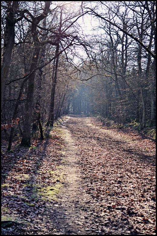 verlaten bospad - heerlijk rustig op dit verlaten bospad