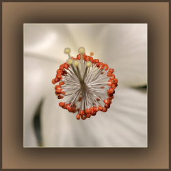 Inside the flower