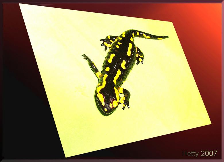 Foto komt tot leven - De vuursalamander is het zat om in dat papier te zitten, het is daar veel te droog!<br />