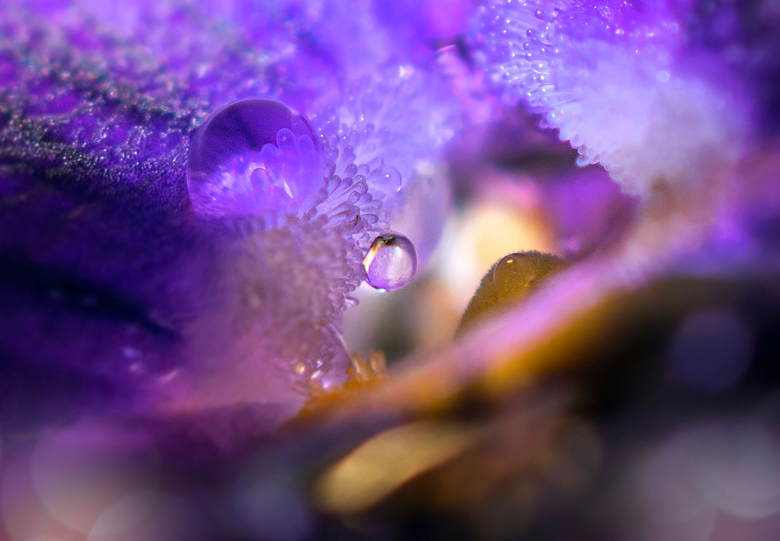 wondere wereld - Een hele andere wereld in het hart van de winter viool.Thanks voor jullie reacties en faves op vorige upload zoomvrienden. Blijf gezo