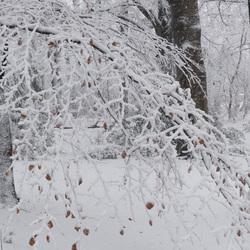 Winter in het Molenbos