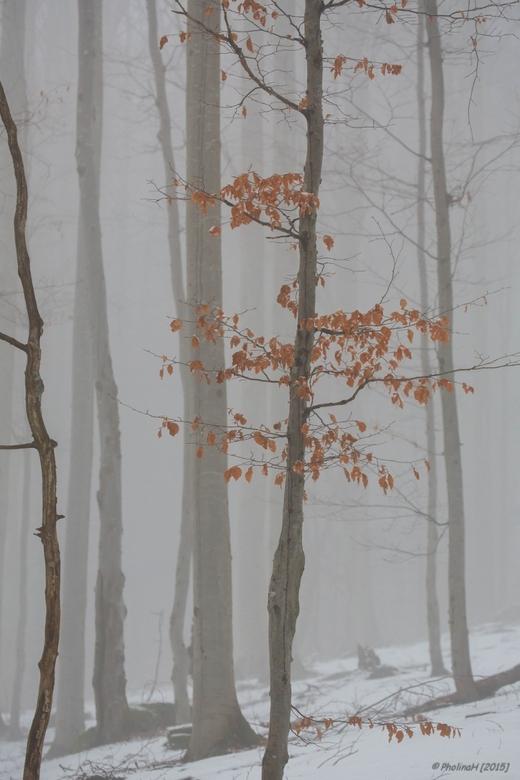 Foggy forest - Op de terugreis van wintersport een tussenstop gemaakt in het Beierse Woud.<br /> Zaterdagmiddag werd het prachtige woud in mist gehul