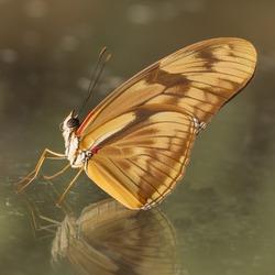 vlinder tegen het raam