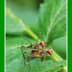Wild sex with flies