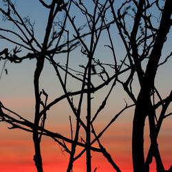 Bomen silhouet zonsondergang