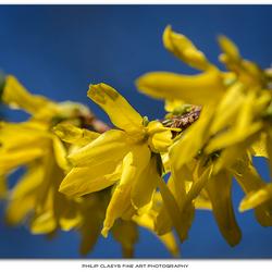 Kleurenpalet van de lente