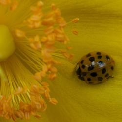 In het geel