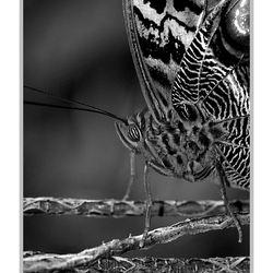 Vlinder in zwart-wit