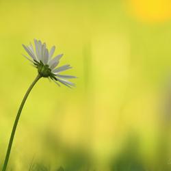 Languit in het gras