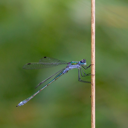 A dragonfly early in the day, keeps the pain away