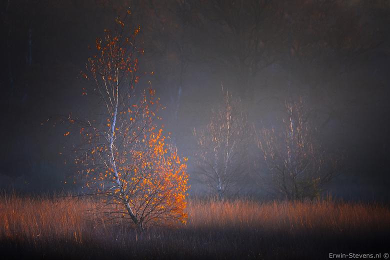 Mooie sferen op de camping 2 - Mooie sferen op de kampina vorig weekend, de herfst kleuren nog goed aanwezig en in combinatie met was mist geeft een m
