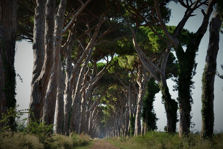 Indrukwekkende pijnbomen Toscane