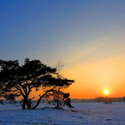 Winter in Soester Duinen