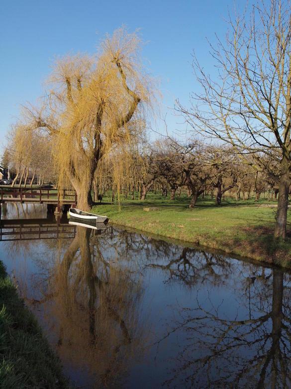 polderlandschap - Boomgaard langs vaart met bootje in de Lopikkerwaard