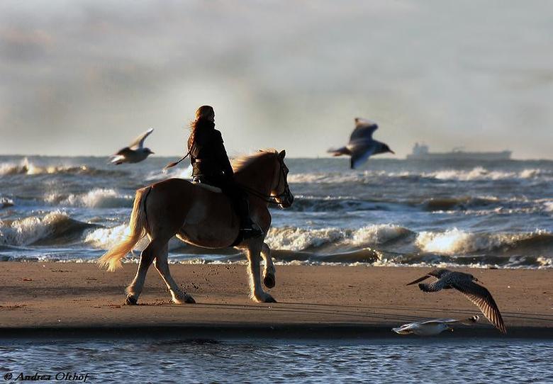 Ritje op strand - Mooie dag met mooi licht ,wat wil je nog meer als er dan ook nog iemand te paard langs de vloedlijn staat ...
