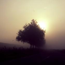 Bomen van Heveskes