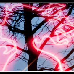 Reflecting tree 02