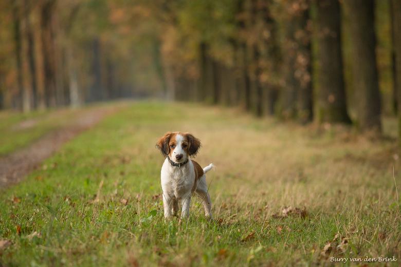 Ondeugend - Dit is Femke. Inmiddels 4 maanden.<br /> Ook zij geniet weer in het bos, net zoals Maera heeft gedaan.