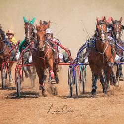 paardenkoers glabbeek -2