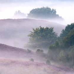 _Misty morning