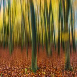 Snelle bomen