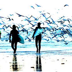Hééél veel meeuwen op het strand