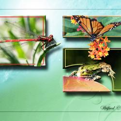 Natuur collage 2