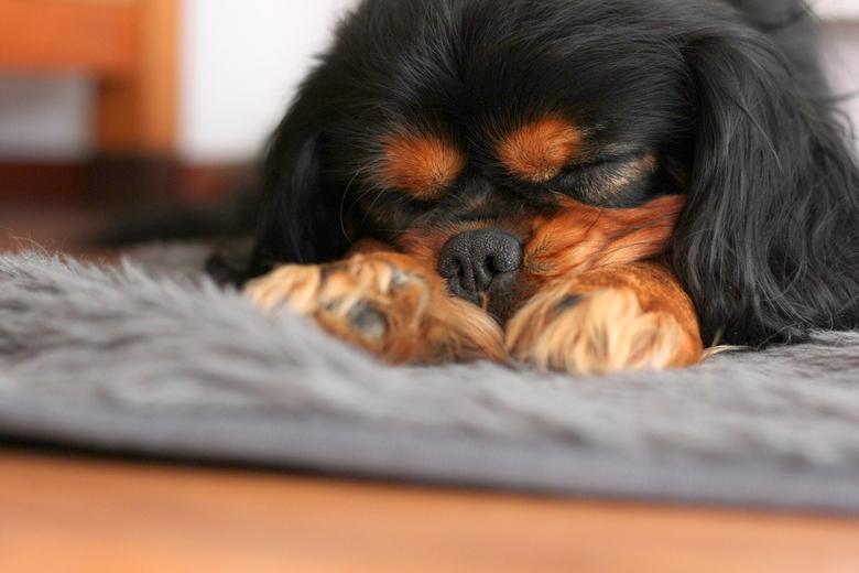 Guus - Een beeld van onze slapende hond.