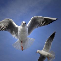 3 legs, 2 gulls