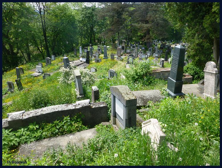 begroeide begraafplaats 1605096115mqw - Sighisoara Roemenie
