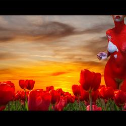 Naakt in tulpenveld