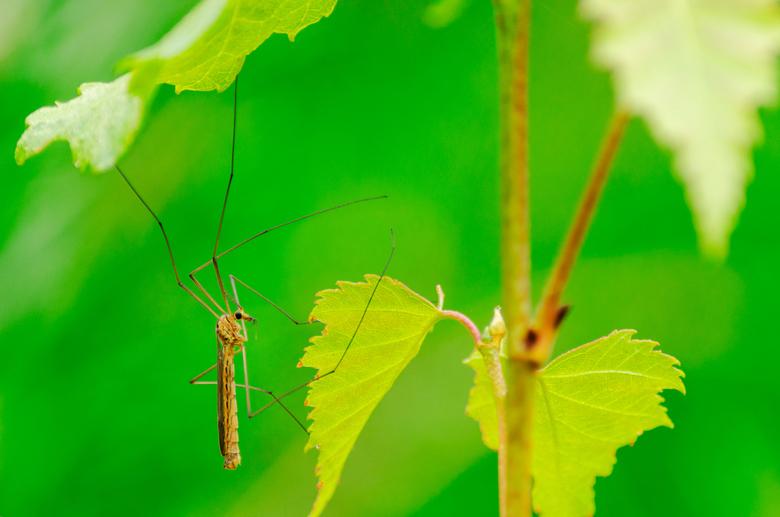 Hanging around - Een mug die me genoeg tijd gaf om een beeld te maken.