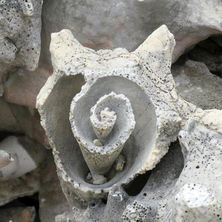 Antillen 5 - Op Bonaire zijn enorme stapels te zien van Conches, Grote schelpen waarin flink wat vruchtvlees zit. Dat maakt het dat deze in de regio v