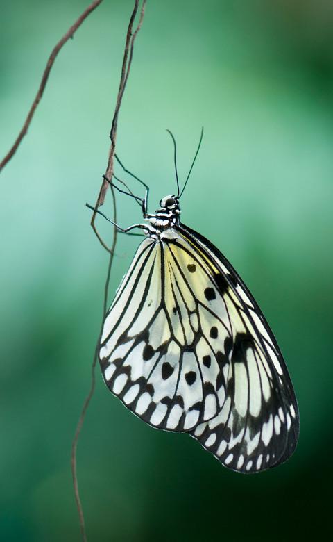 Butterfly beauty - Nog even ...... en ze zijn er weer!!! <br /> <br /> Groet,<br /> Bram.