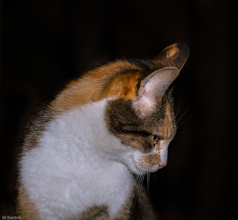 De kat van Erve Eme.