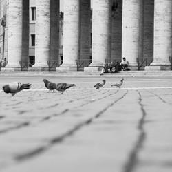 duiven op het vaticaanplein